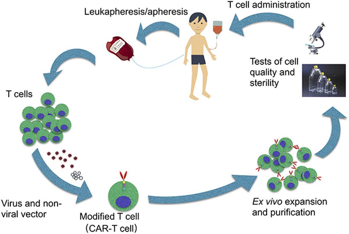 CAR-T cells: Uma imunoterapia revolucionária contra o câncer